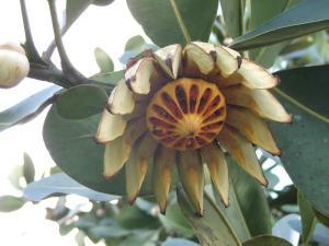Flor salvaje 3
