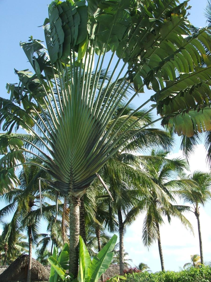 Dominica no es República Dominicana